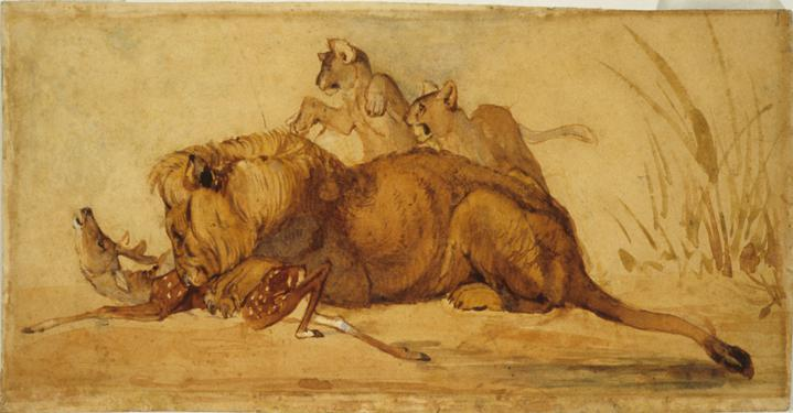 Lion with Cubs Consuming a Gazelle